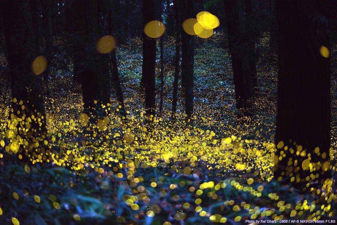 Cuques de llum
