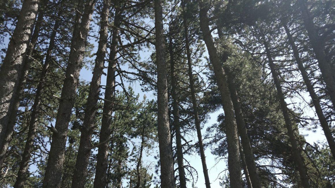 Petjades invisibles – L'espurna de Lluèrnia Kids